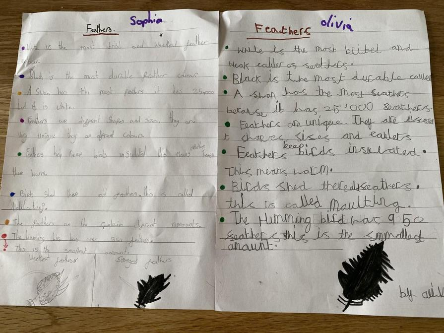 Olivia and Sophia's work about feathers