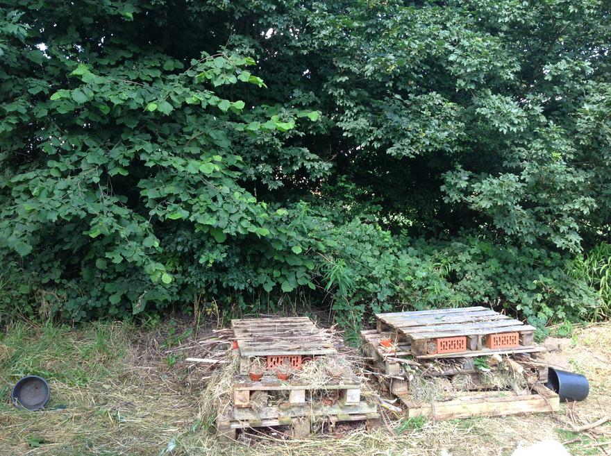 Our bug hotels