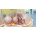 Monday 4 o'clock: The first egg hatched!