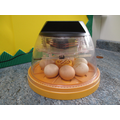 Monday morning: 7 eggs in the incubator