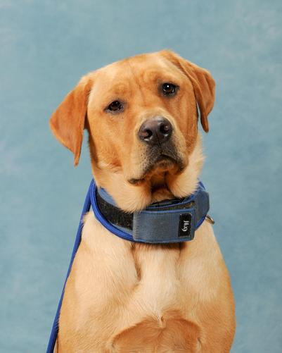 Khush -  Our School Dog