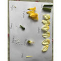 Science - Labelling the parts of a flower
