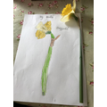 Science - Dissect a flower diagram