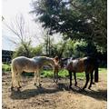 Lily the Horse Whisperer!