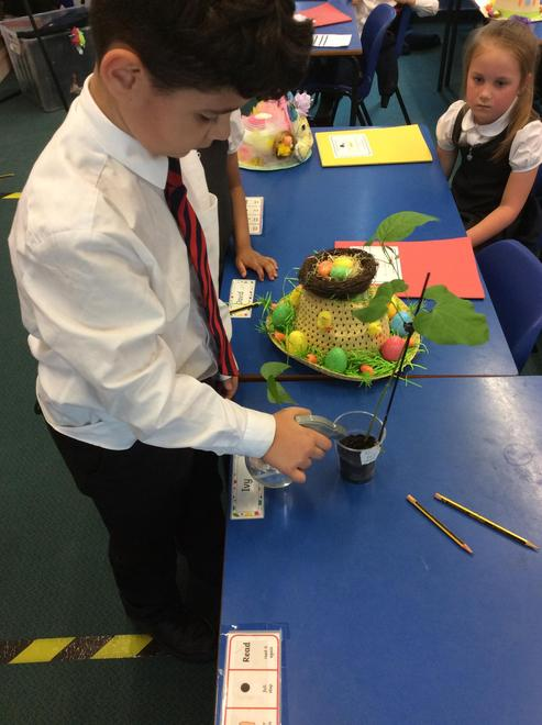 Sizley waters the bean plant! 'Plants need water', he says.
