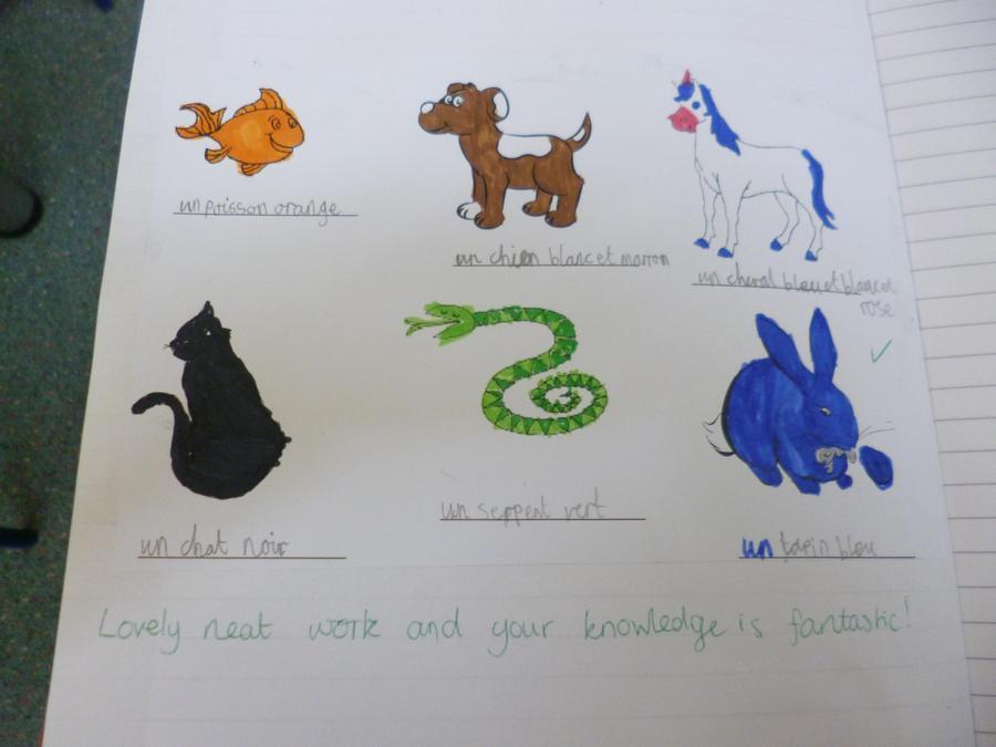 Year 3 work on animals