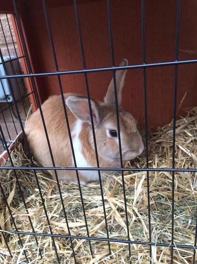 Biscuit the rabbit