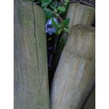 Who's hiding behind behind the logs?