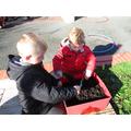 We planted Daffodil bulbs.