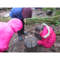 Looking for creatures under logs