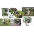 Forest School Oak