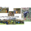 Litter Picking Ash and Oak