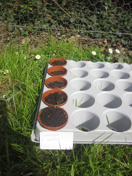 We put the marigold seeds in different places to see how it would affect its growth.