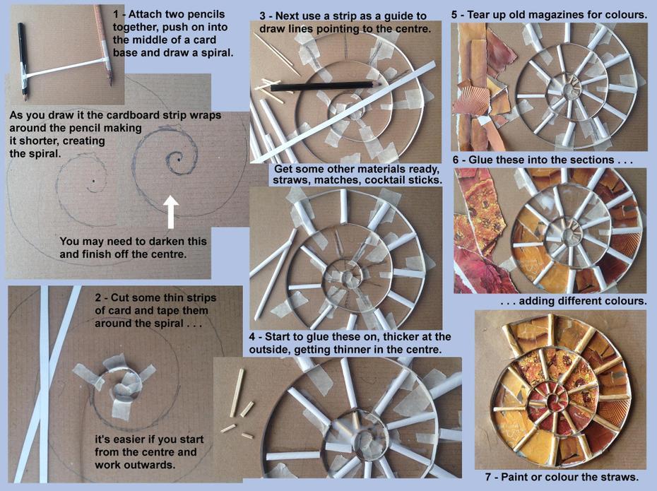 Ammonite 2