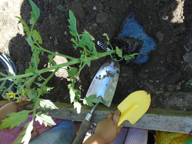 Digging, weeding, watering!