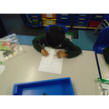 Designing our seed packets