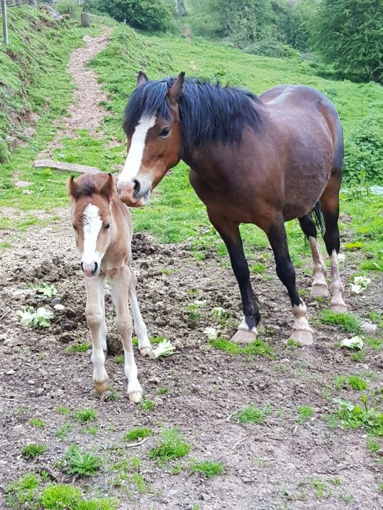 Horse and her foal