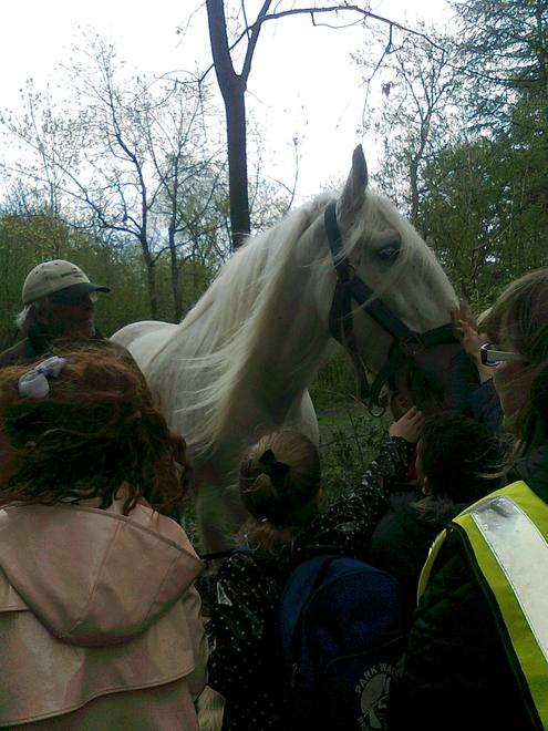 Shire horses in the woodland zone