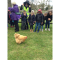 There was a lot of excitement over the chickens!