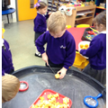 Cutting up and investigating the left over fruit!
