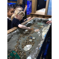 Year 1 - Visit to Sealife Centre