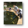 Year 6 - Pond dipping