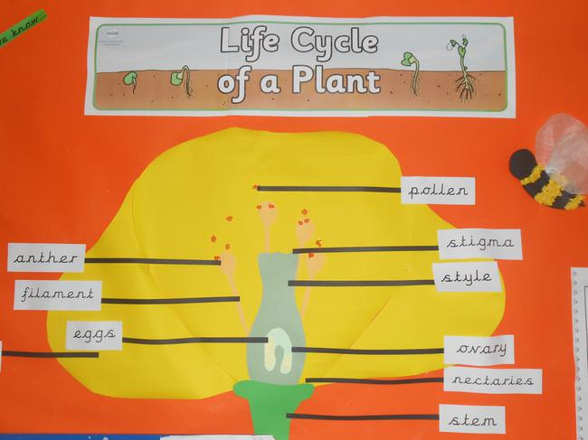 We learnt about the plant life cycles