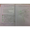 Year 3 Reading comprehension