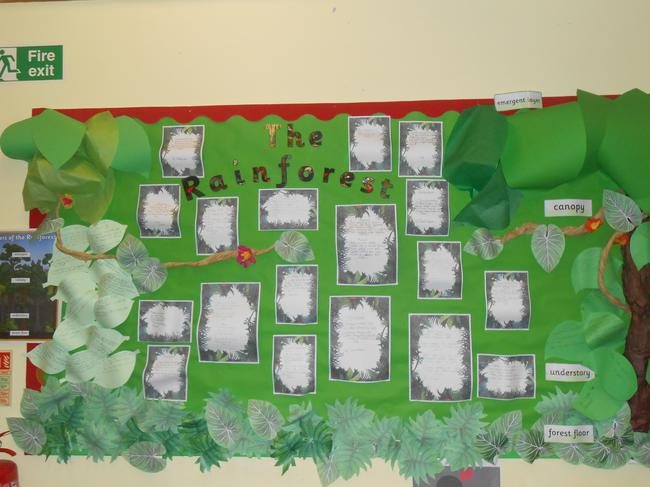 We wrote poems about the Rainforest