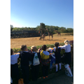 Year 1 - Visit to Colchester Zoo