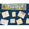 Year 1 - Labelling plants