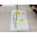 Year 3 - Labelling plants