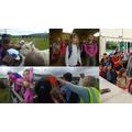 Day 2 - Donkey Sanctuary