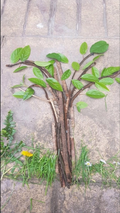 Tree and Grass by Lucas from Romiley