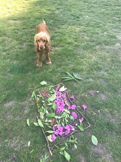 Land Art discovered by Mabel the dog in Bramhall