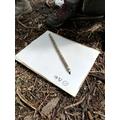 Elder pencil