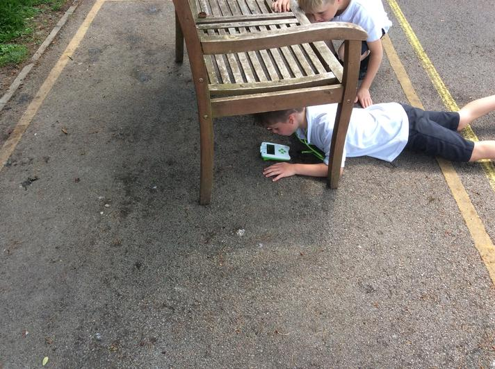 Using data loggers.  There was less light under the bench, in the shade