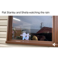 Flat Stanley and Sheila watching the rain