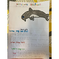 A dolphin fact file by Lexi
