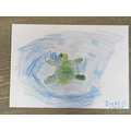 Daniel C has drawn a loggerhead turtle