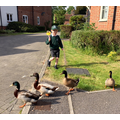 Ben, Basil and the ducks!