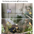 Flat Stanley and Sheila bird watching