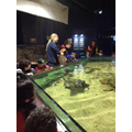 Year R Aquarium trip - understanding the world