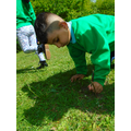 making animal habitats