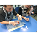 Heart Dissection for our Circulatory system topic