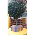 Our 'Reading Tree'...