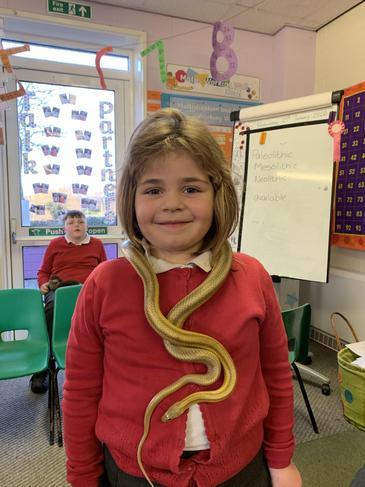 Sophie snake