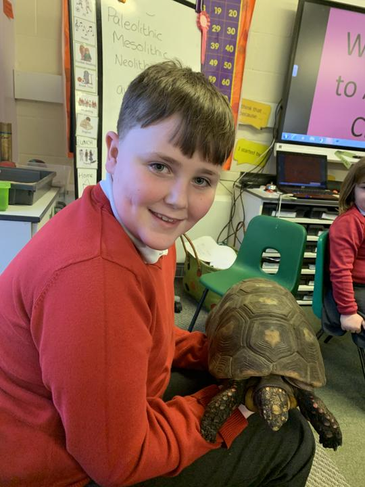 Boris the tortoise