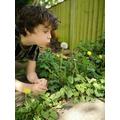 Marvin enjoying the garden