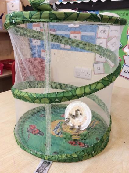 We have removed the lid and placed them in the Chrysalis Station